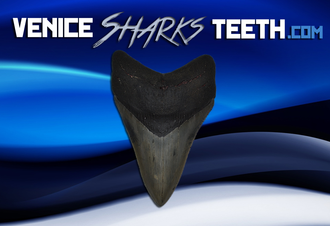 sharkteeth